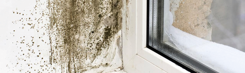 get rid of black spot mould